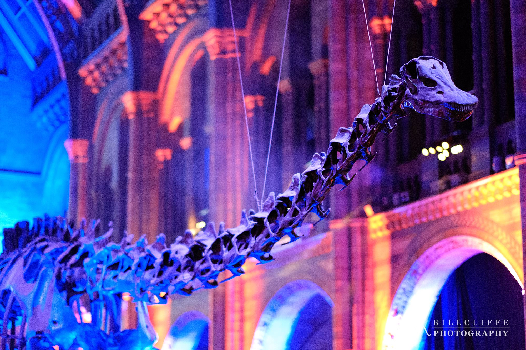 london event photographer natural history museum dippy 004 - Celebrating Dippy at The Natural History Museum