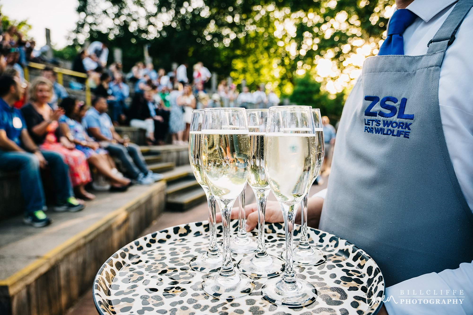 london event photographer zsl london zoo 1706 010 - A Party with the Penguins at London Zoo