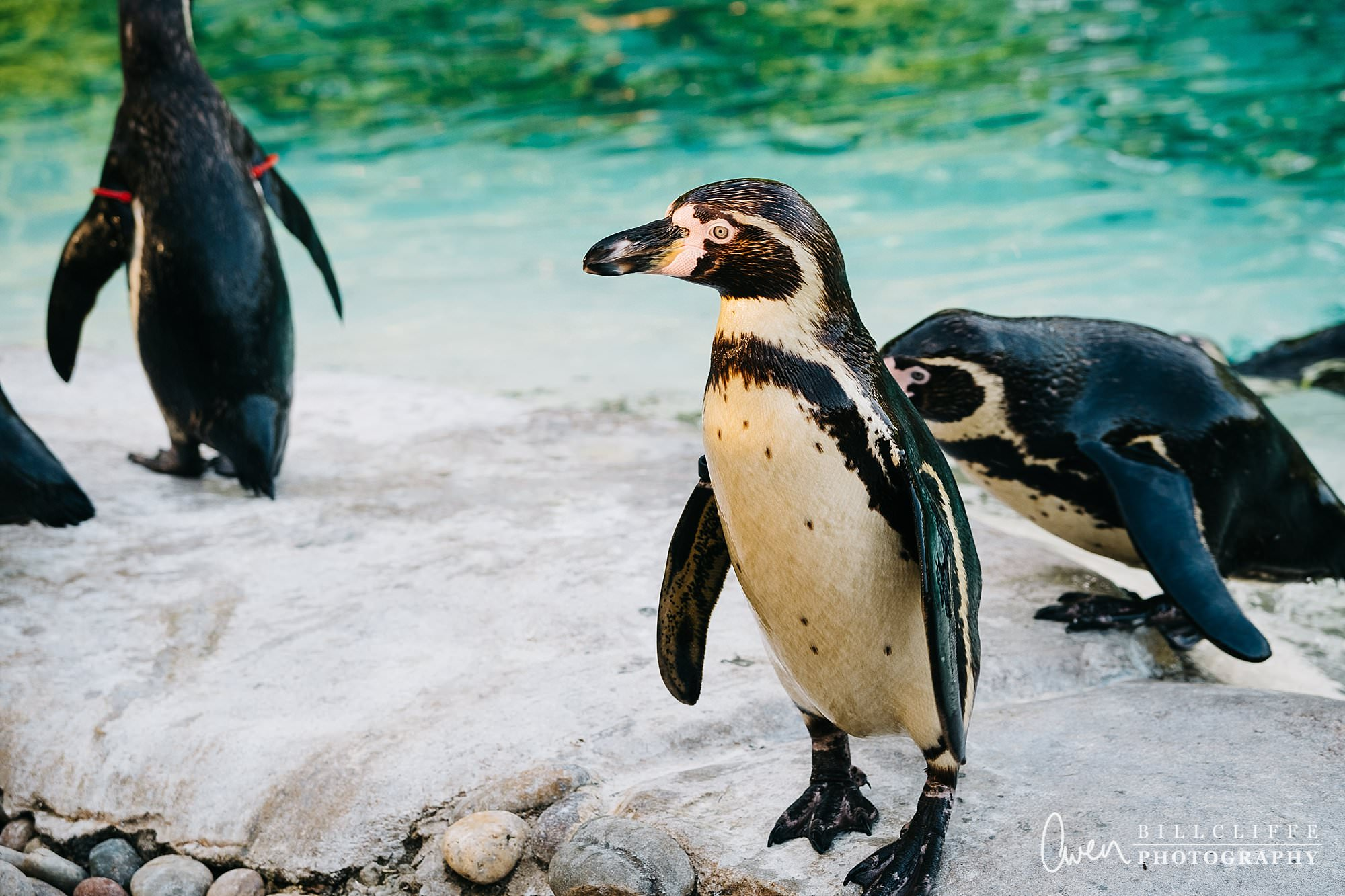 london event photographer zsl london zoo 1706 012 - A Party with the Penguins at London Zoo
