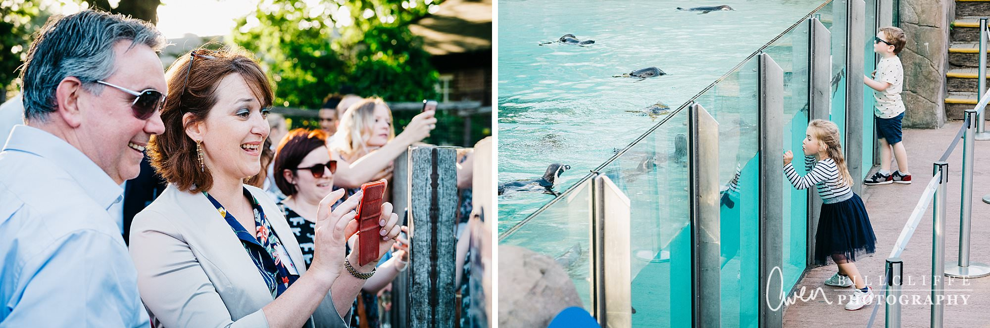 london event photographer zsl london zoo 1706 013 - A Party with the Penguins at London Zoo
