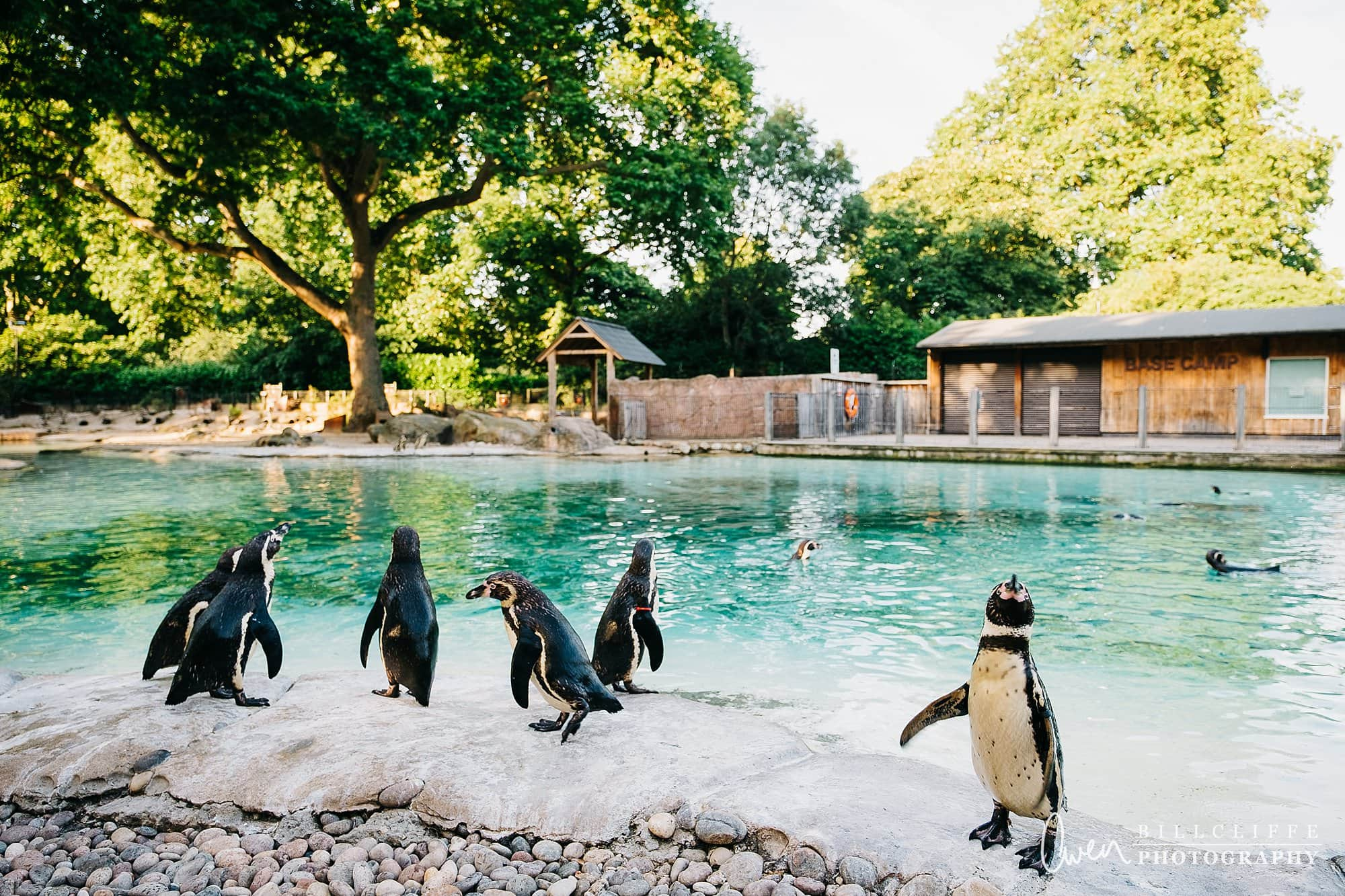 london event photographer zsl london zoo 1706 014 - A Party with the Penguins at London Zoo