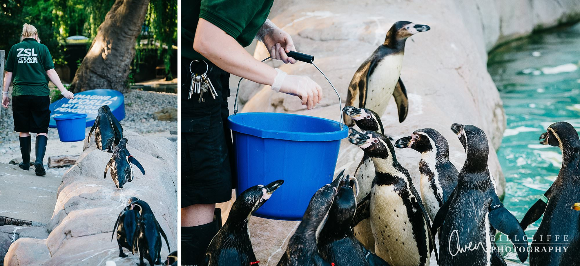 london event photographer zsl london zoo 1706 015 - A Party with the Penguins at London Zoo