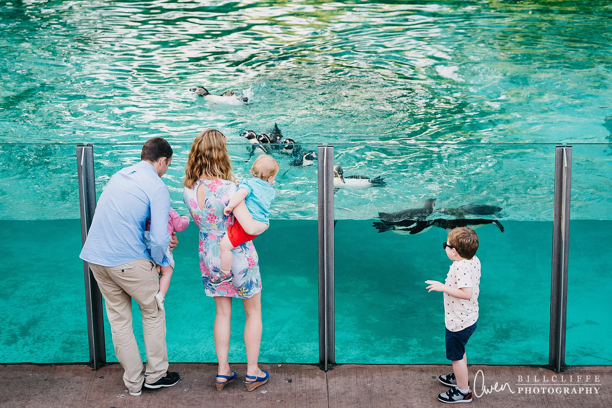 london event photographer zsl london zoo 1706 017 - A Party with the Penguins at London Zoo