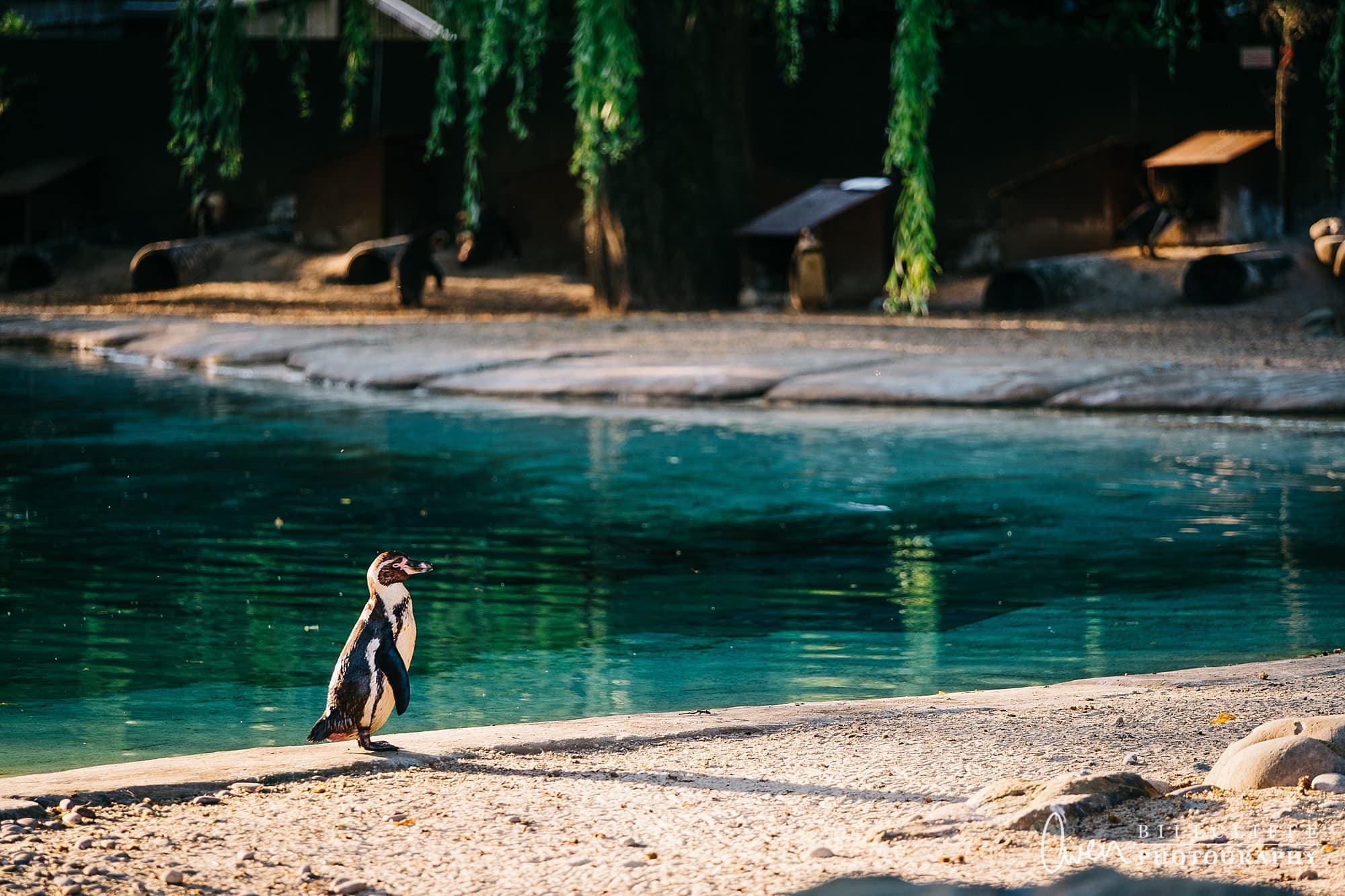 london event photographer zsl london zoo 1706 021 - A Party with the Penguins at London Zoo